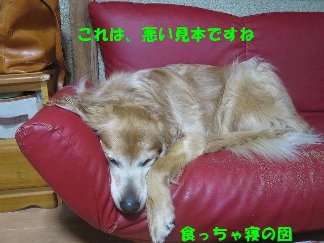 IMG_0144.jpg