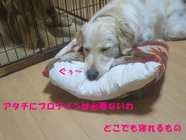 IMG_0155.jpg