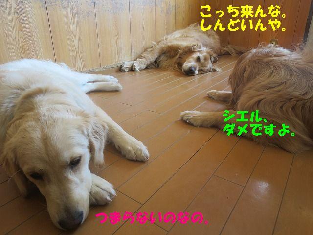 IMG_0211aa.jpg