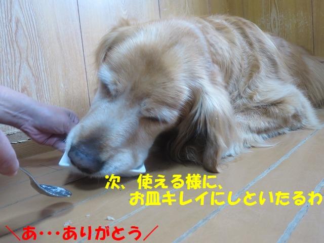 IMG_0413_20170407215344114.jpg