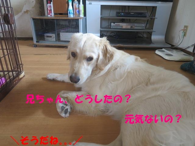 IMG_0418_20170407215347091.jpg