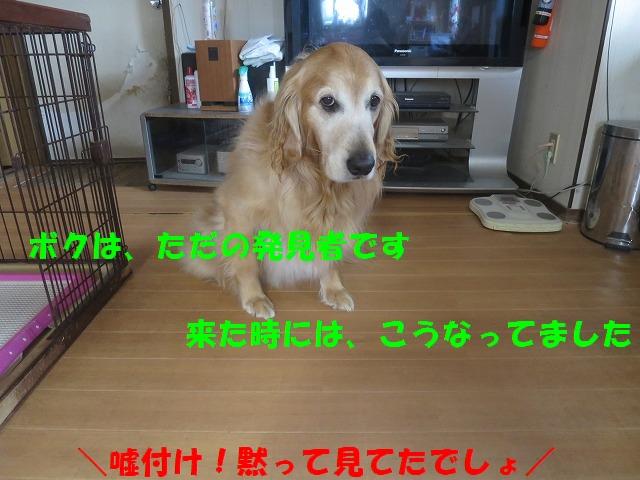 IMG_0440_20170408230006cae.jpg
