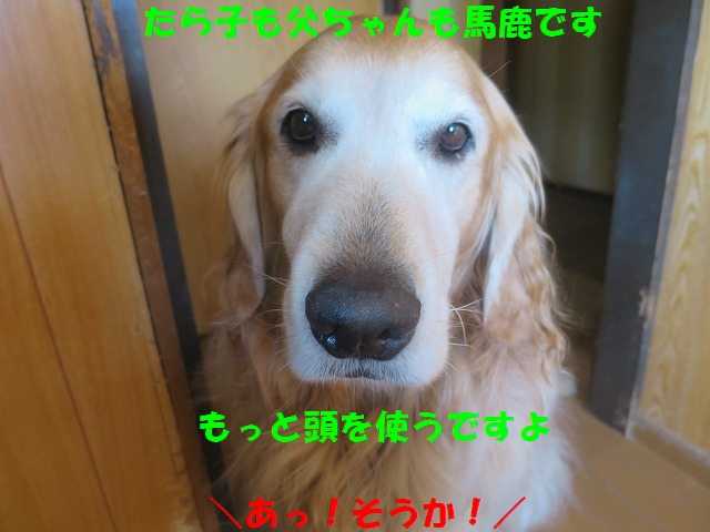 IMG_0570_20170412213638446.jpg
