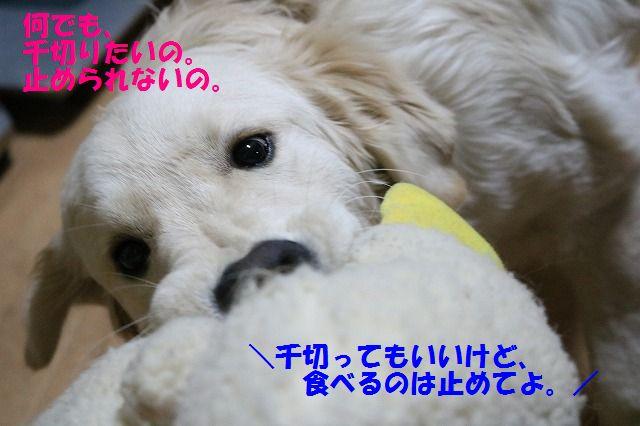 IMG_3207_20170212194501362.jpg