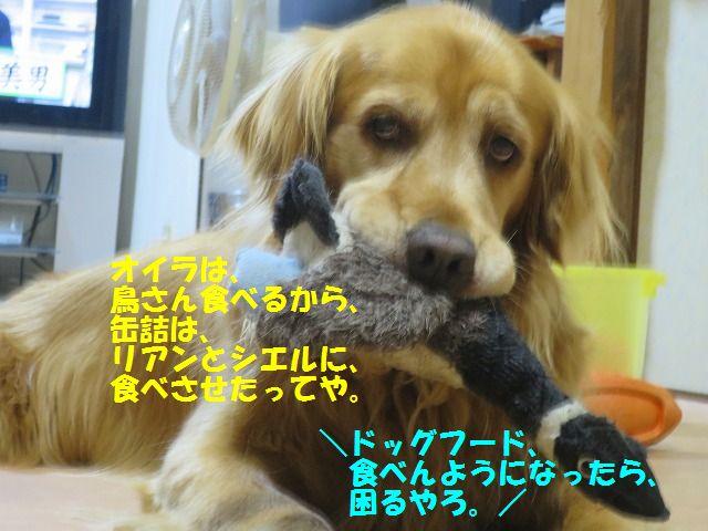 IMG_4020_20170418234200f1e.jpg