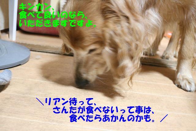 IMG_4372_201702111857265d1.jpg