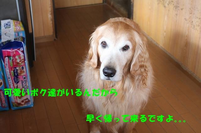 IMG_4543.jpg