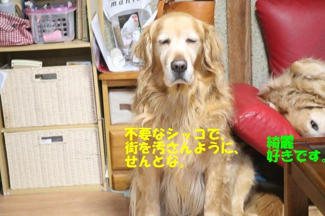IMG_4631.jpg