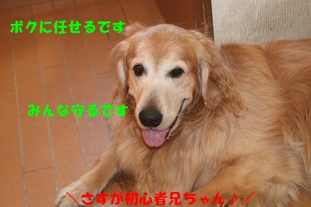 IMG_5559_20170424202233616.jpg