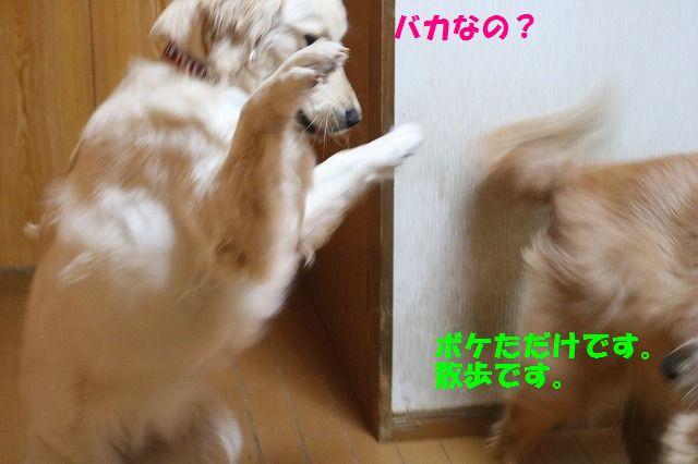 IMG_5979_20170313234415fa8.jpg