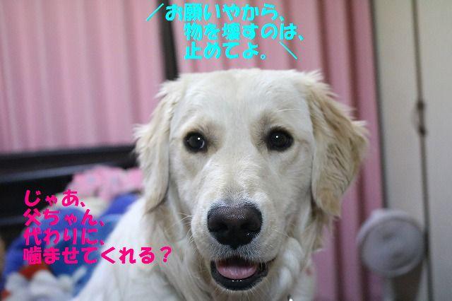 IMG_6137.jpg