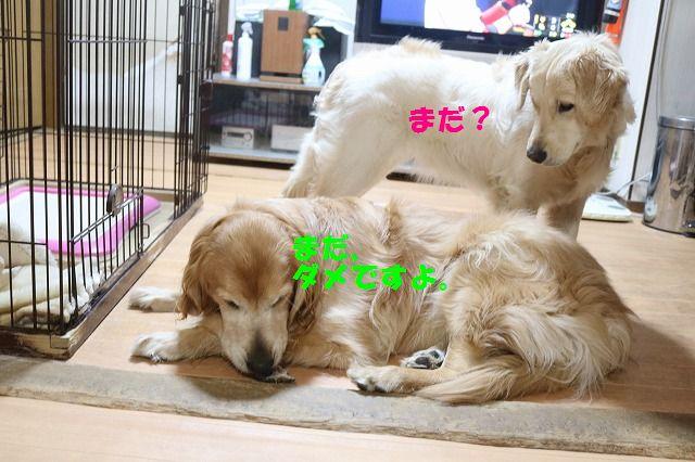 IMG_6291.jpg