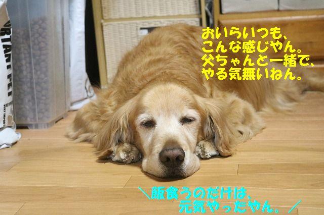 IMG_6856_20170411192316287.jpg