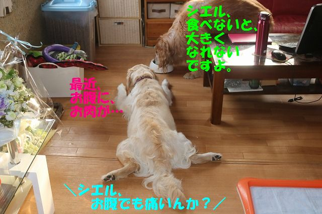 IMG_7035.jpg