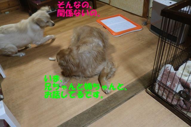 IMG_7137.jpg