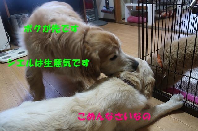 IMG_7261_20170426163819985.jpg