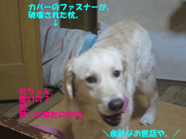 IMG_9525.jpg