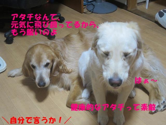 IMG_9769.jpg