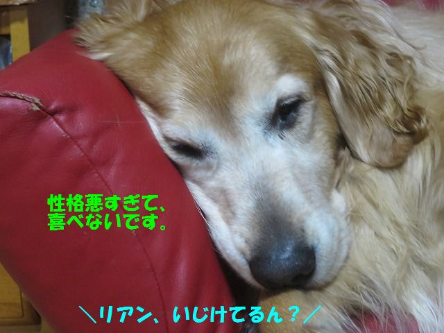 IMG_9885d.jpg