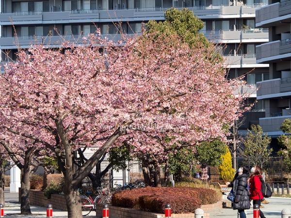橋本公園 F