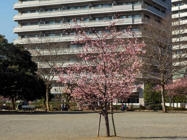橋本公園 E