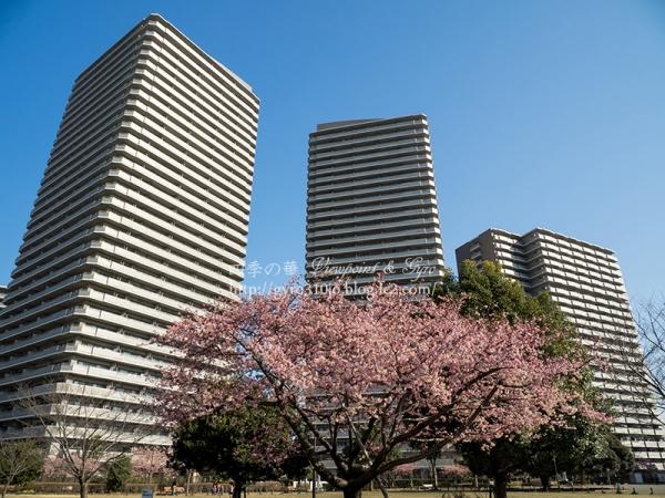 橋本公園 A