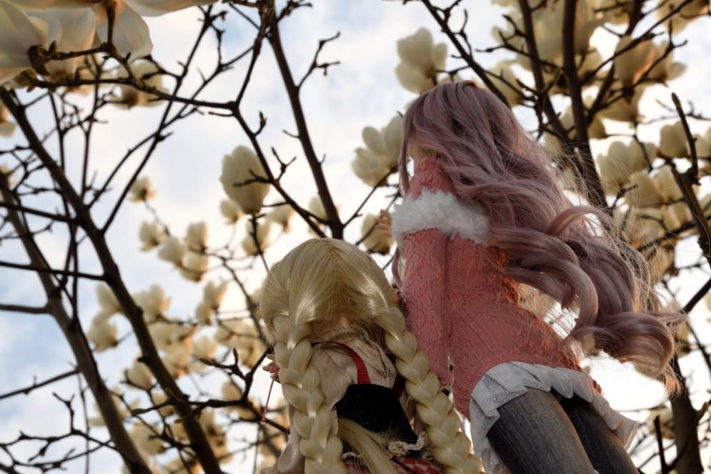 神目と木蓮ブログ用_033