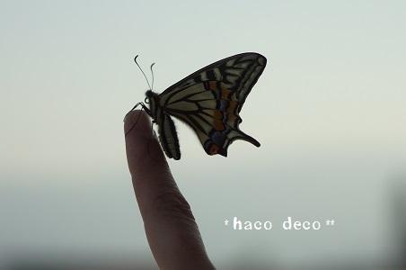 DSC08774.jpg