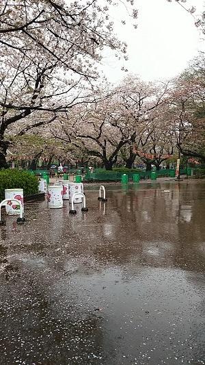上野 桜1