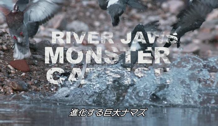 catf2.jpg