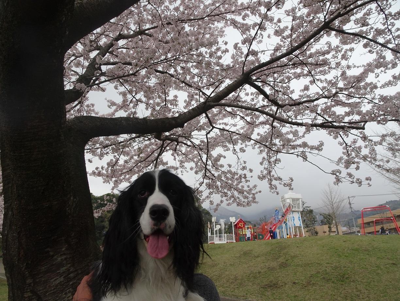 春君の季節