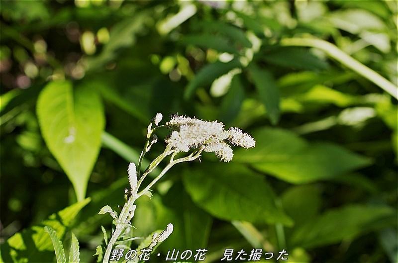 s-P20160811-152655-0.jpg