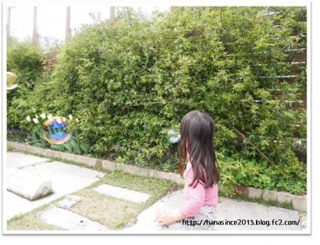 モッコウバラとフェンスと花壇