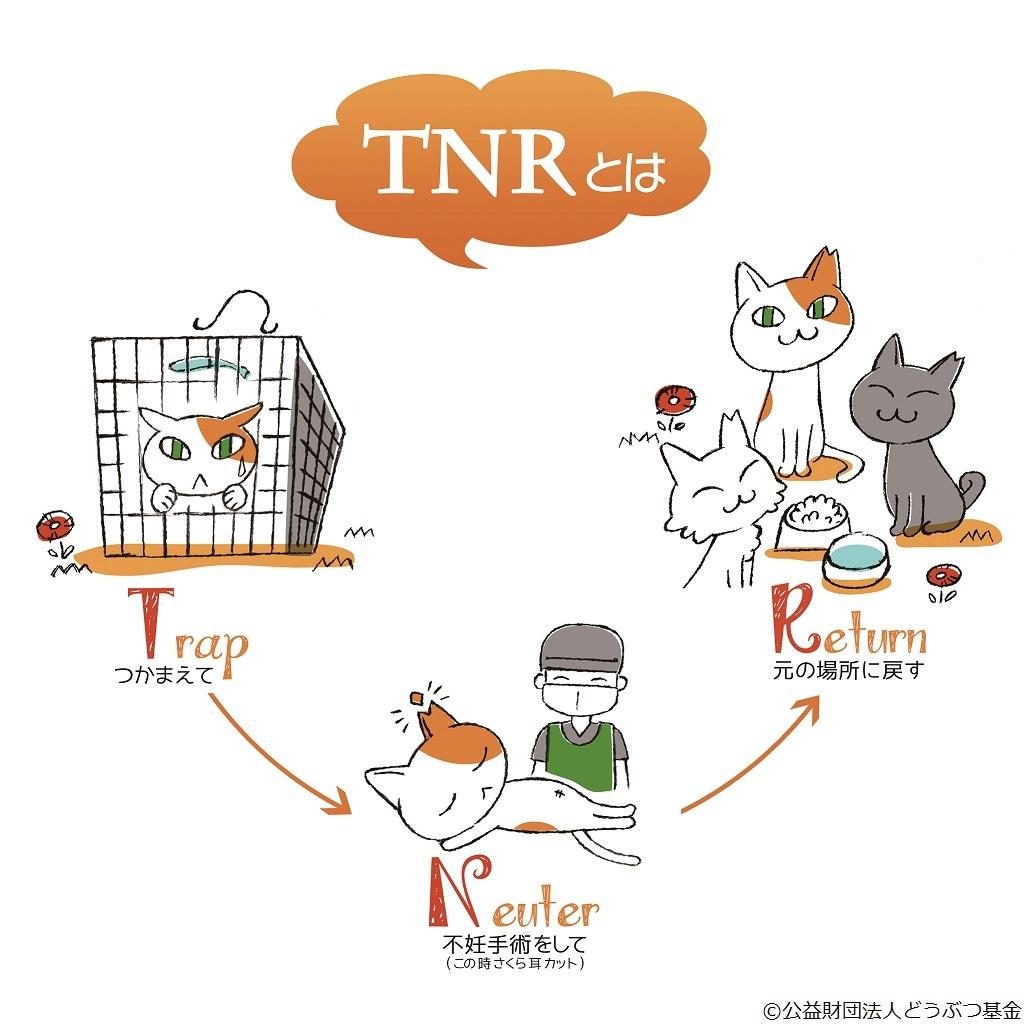 TNRまる型