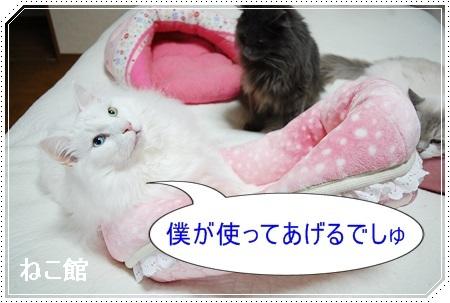 blog12_20170319133704e4c.jpg