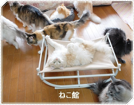 blog6_20170222162946d2c.jpg