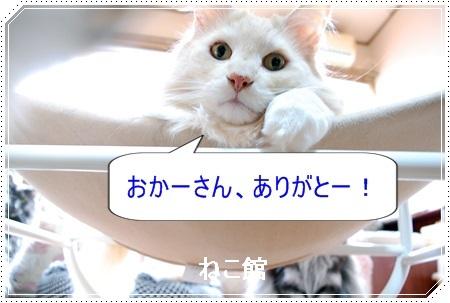blog7_20170222162947977.jpg