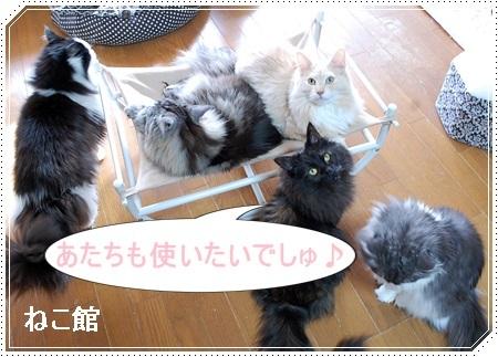 blog8_201702221629498a1.jpg