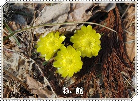 blog_2017031409501437b.jpg