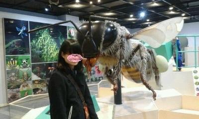 PA0_0124 ハチ