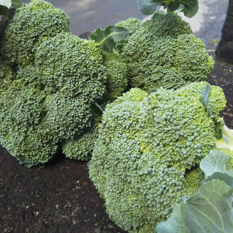 Broccoli 20170321