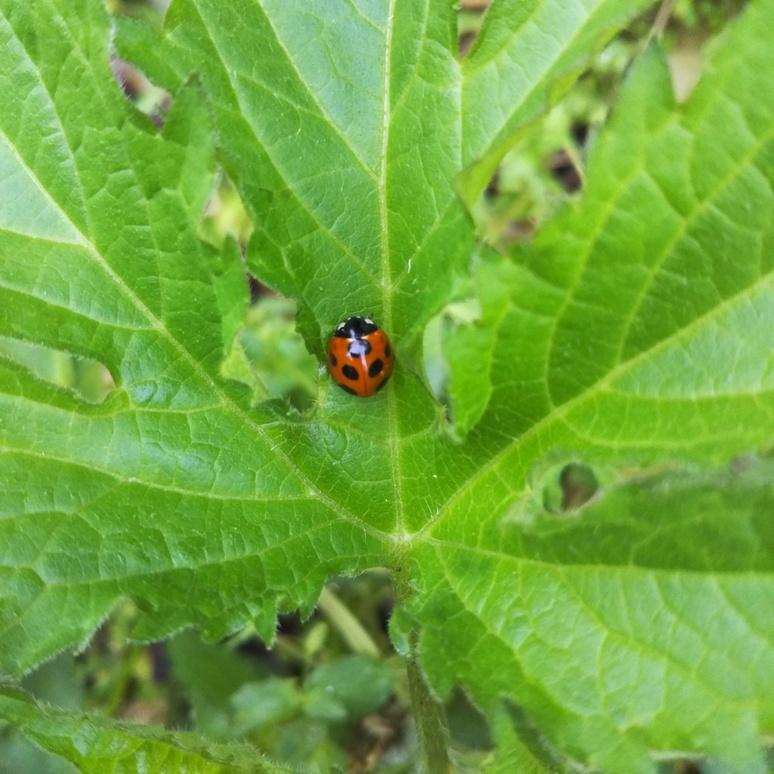 Ladybird 20170411