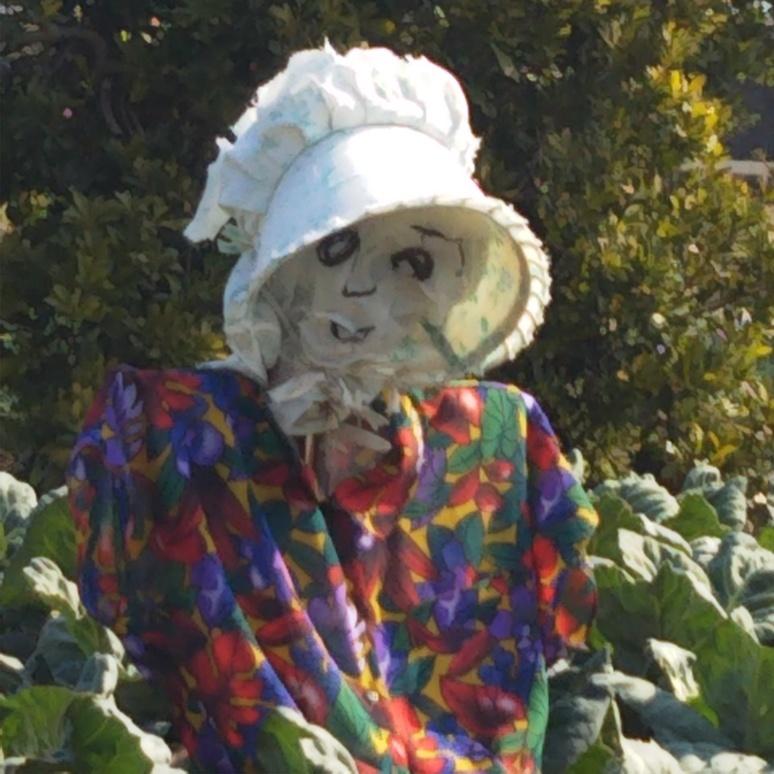 Scarecrow 20170317
