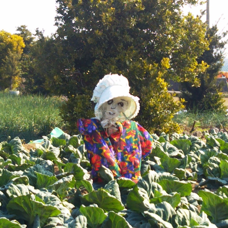 Scarecrow 20170317-2