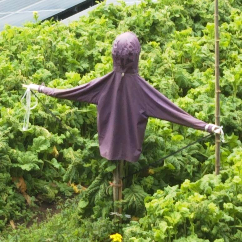 Scarecrow 20170327