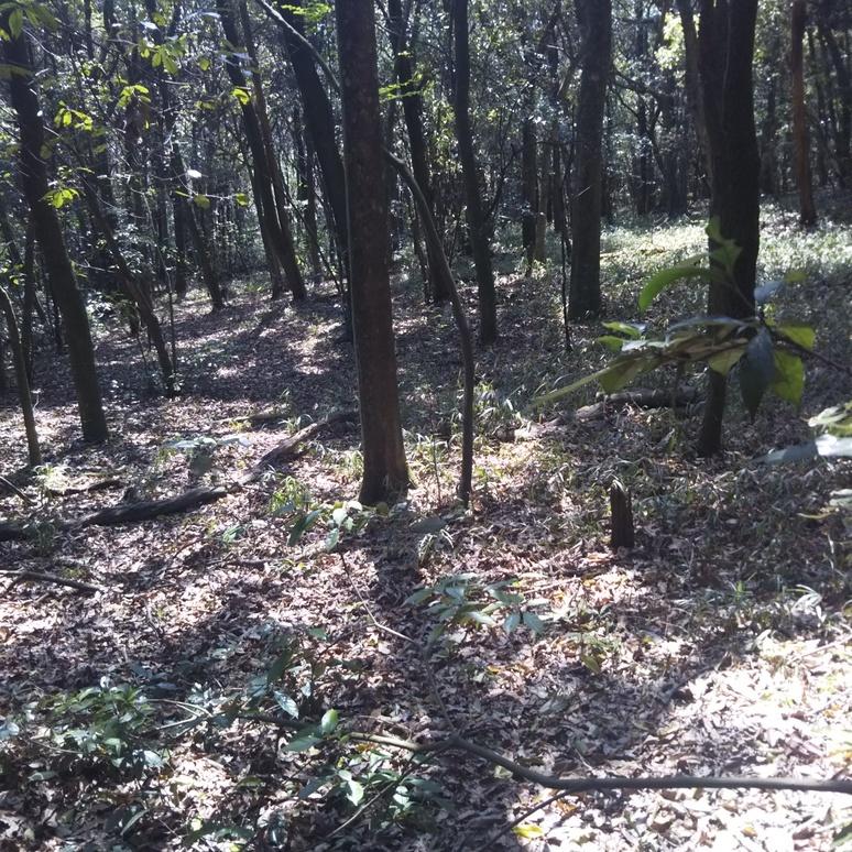 Woods 20170413-2