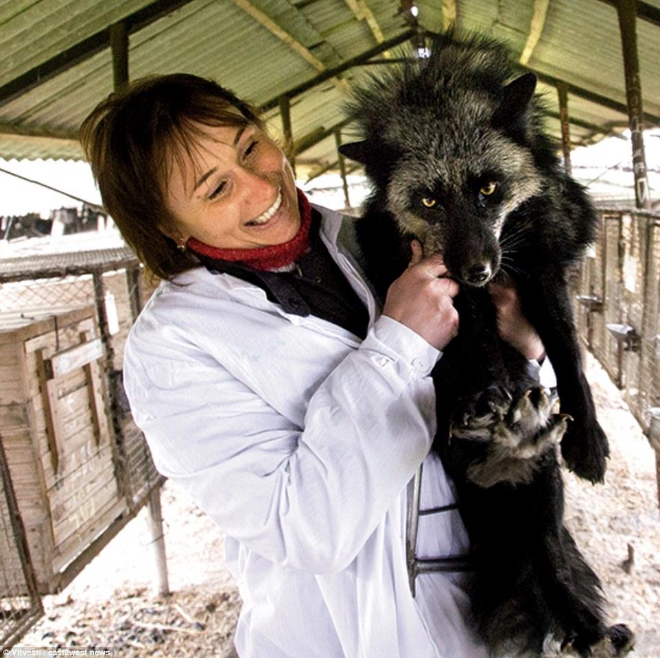 russian_minkfarm2.png