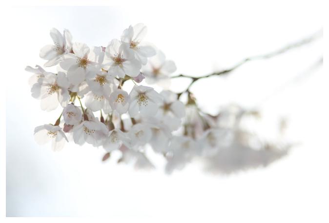 2017-04-04-01.jpg