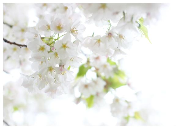 2017-04-13-13.jpg