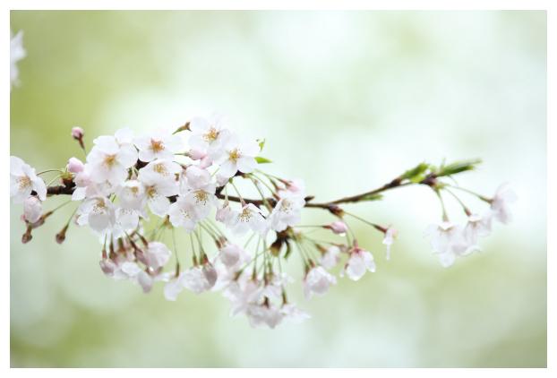 2017-04-18-30-2.jpg